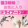 猫3姉妹がお気に入りのキャットフード2選!食いつきが違う!!【カリカリ編】