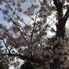 三線教室、4月度開催のご案内です!!