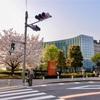 乃木坂の国立新美術館と六本木ヒルズと桜