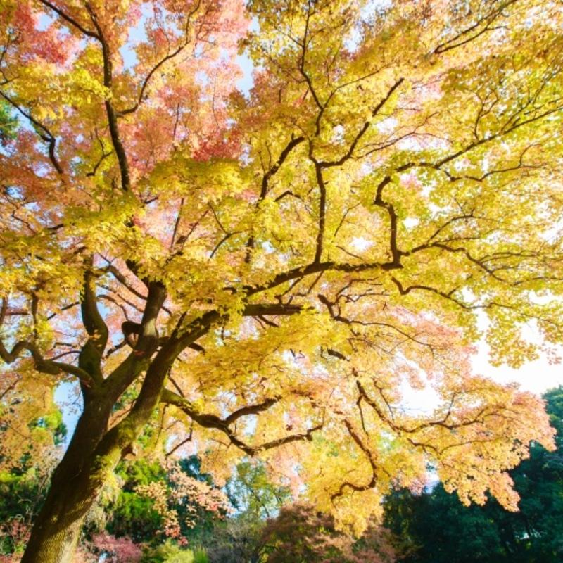 京都のオススメ紅葉穴場!ゆっくりモミジ狩り&秋フェスへ行こう!