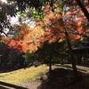清澄公園の紅葉