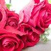 毎年お花になってない? 今年の母の日は一味違うプレゼントにしよう! お勧め母の日ギフト