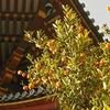 興福寺 南円堂界隈