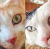 十五夜に捧ぐ、ネコの瞳を映した15の写真。