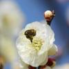 春の気配 そのⅡ(8)