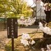 2019.3.28横浜桜開花状況@弘明寺駅前編