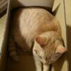 お猫様は箱が好きですね