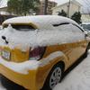大雪なんてウソッパッチ