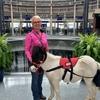 この空港で乗客がリラックス出来るためにミニ馬が登場