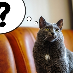 カギ括弧をどう訳す?――前編【ポール・ウォラムの視点】