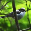 Z7と500㎜レンズで野鳥を撮る。