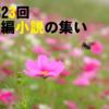 【第23回】短編小説の集いのお知らせと募集要項(※必読)