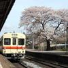 小絹駅の桜&庭亭