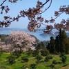 ♬まんかいの~桜~~