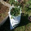 雑草をゴミ出しする時のコスト削減技