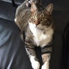 我家の王子様🐈ノアとマッタリしながら、Twitterの猫動画に癒される一日
