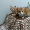 猫用コタツは安全快適