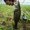 バス釣り2019(37)【お盆休みの新利根川釣行⑤】