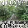 【動画】神奈川県小田原市 作業道 桜山線(白銀林道から続く道/撤退)