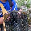 旭川市、辺別川でニジマス釣り、息子くん久しぶりに魚釣りです。