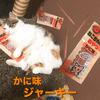 キャミーの【ねこちゃんのおやつ】カニ味のジャーキーを与えたら意外とゆずに大好評!!