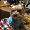 小型犬に多い心臓病