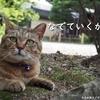 旅に猫、もふれてますか? ~梅宮大社~