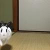 ふきちゃんの走り方