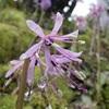 御岩神社,清明の花