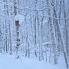 巣箱の上にたくさんの雪が