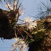 キリシマツツジにミヤマカラスアゲハ&ひらひらきらきらアサヒナカワトンボ&お花教室「春の森フレームアレンジ」♪