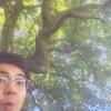 小長井町にある、樹齢千年以上の天然記念物オガタマノキ。