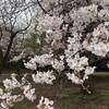 3月25日(木)午後・両親お見舞いに来る