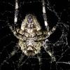 小径いっぱいにオニグモの巣 ~A trail full of Oni spider webs
