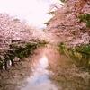 弘前桜祭り 2017
