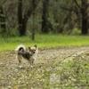 65s   知っていましたかこの条例 犬の散歩・・・。