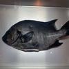 魚突きで美味しい魚を紹介!