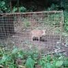 鳥獣害対策・被害に会うと営農意欲がなくなってしまう