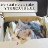 猫の道具 ~宅配便到着~