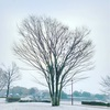 熊本市内で初雪が降った今朝。