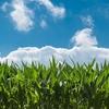 農業次世代人材投資資金の準備型を徹底解説