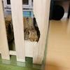 ウサギのちまき今日の1枚『覗き見』