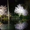 兼六園・金沢城「夜桜花見」ライトアップ2020年【総集編】