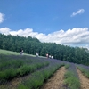 ファーム冨田でラベンダーに癒されたあとは、ひつじの丘でジンギスカン