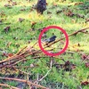 ファンテイルという名の鳥