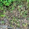 野草採集では除草剤に気を付けましょう。