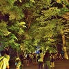 下鴨神社の光の祭2019、混雑状況とその様子【ライトアップ】
