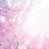 「桜の咲く頃にはいつも思いだす…」episode-4