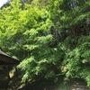 竜池山 弘川寺(ひろかわでら)は紅葉がきれいなお寺だった! その2