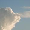 2013/07/18 あの雲ライオンの顔に似てる!